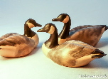 Canada geese - goose carvings