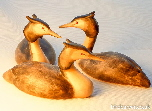 Grebes - and other water bird carvings